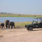 Our Luxury Safari Travel Guide