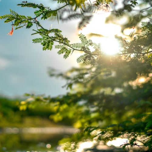 tree branch in sunlight