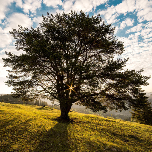 landscape of tree in front of blue sky with some clouds