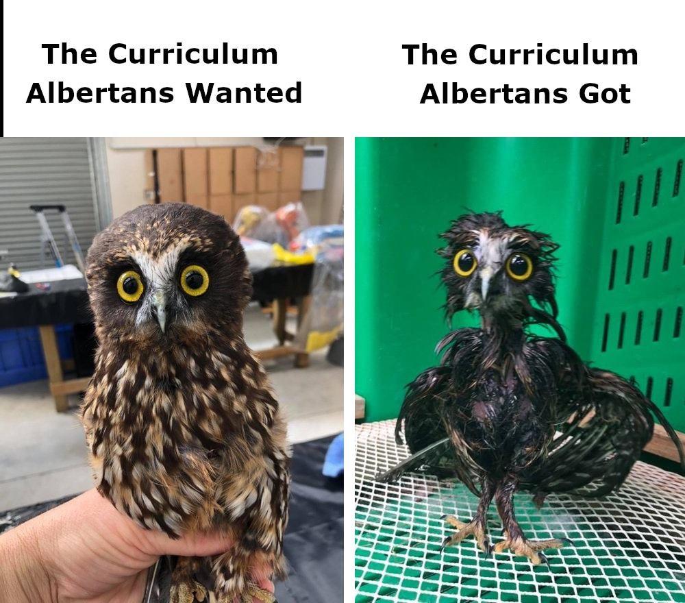 Curriculum we wanted (Owl) vs Curriculum we got (Frazzled owl)