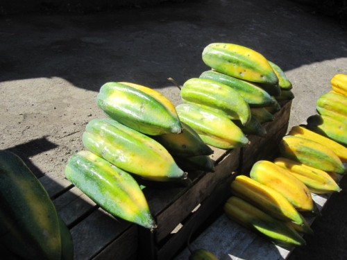 the Babaco in the Ecuador Amazon region