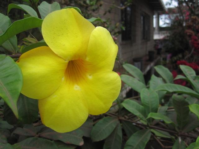 flower-ecuador