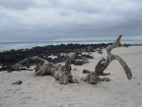 tortuga-bay-galapagos