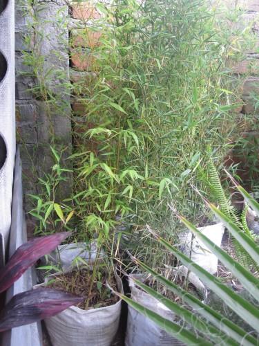 bamboo-ecuador