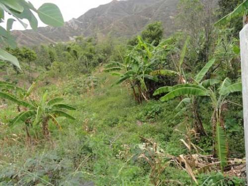 vilcabamba-lot
