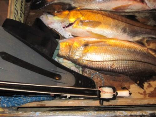 fish ecuador