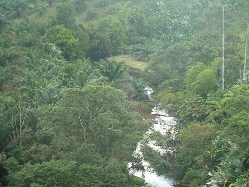 palm oil farm ecuador la concordia