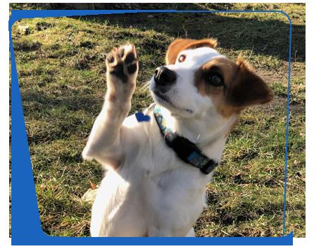 jumpstart dog training