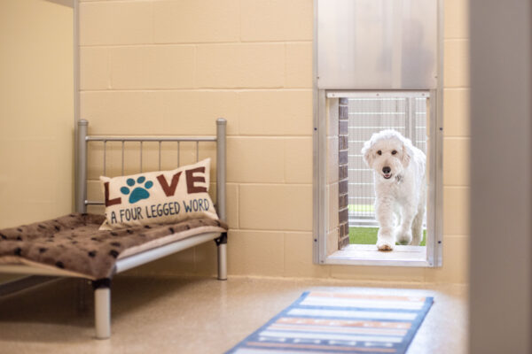 Indoor/Outdoor Suites for Dogs