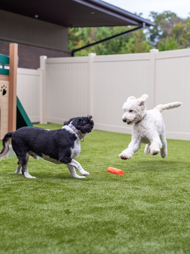 Two Dogs play together in Yard