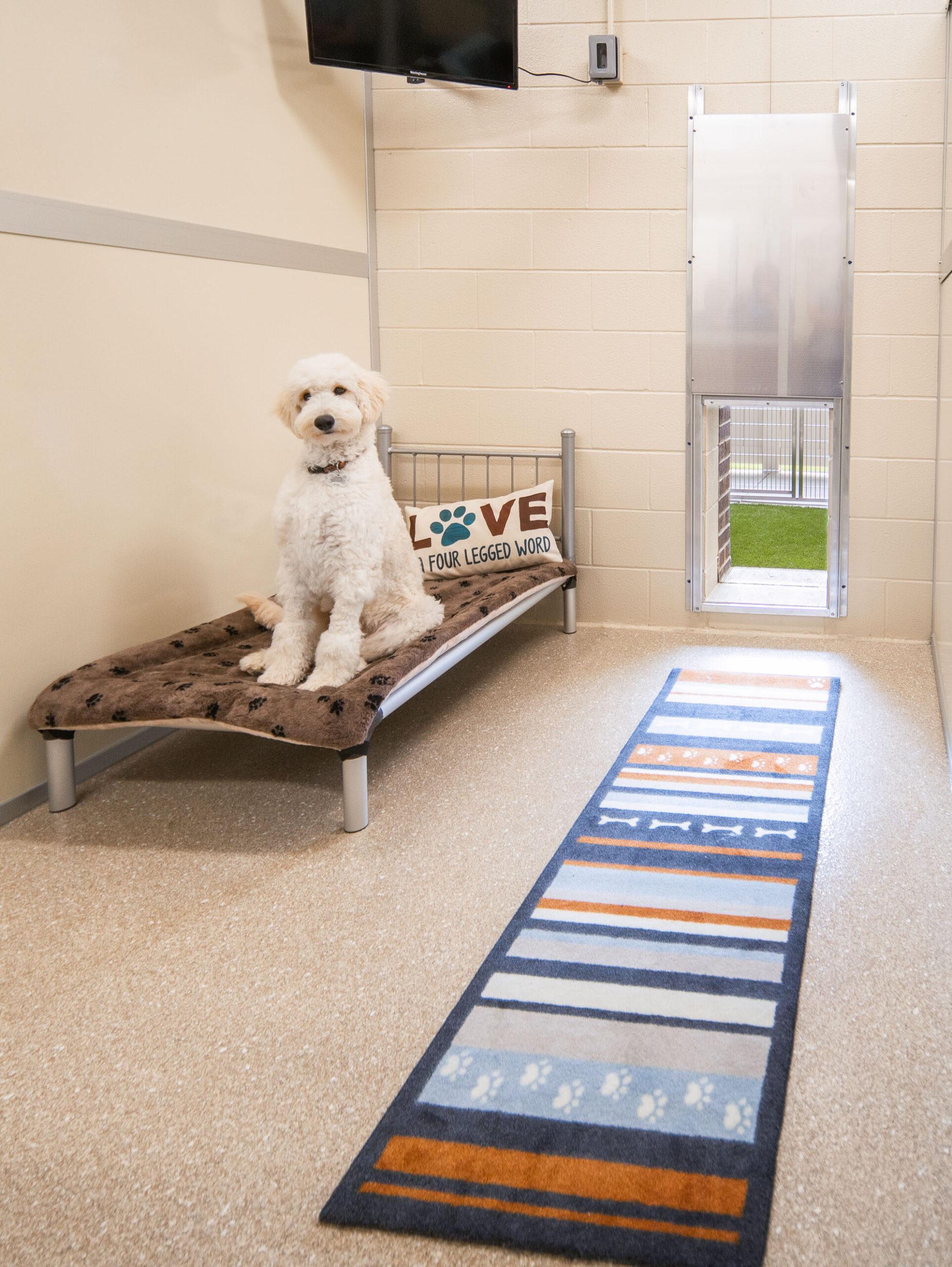Dog on Bed in Indoor/Outdoor Suite