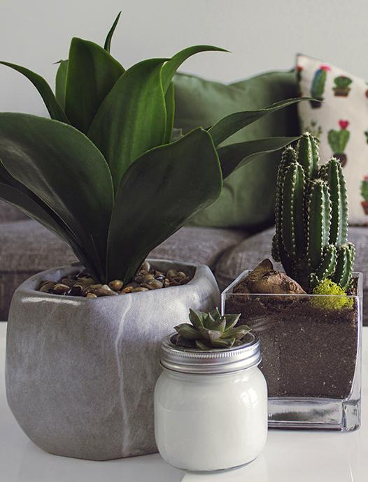 Cactus plant lifestyle image on MindTherapy.ca