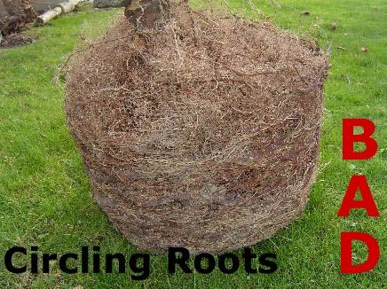 Circling Roots