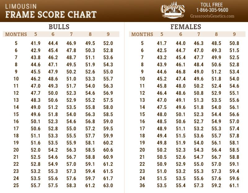 Frame Score Chart
