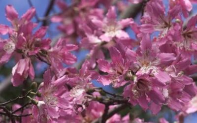 Spring Pests to Watch Out For