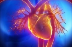 Cardiology Software Could Change Healthcare