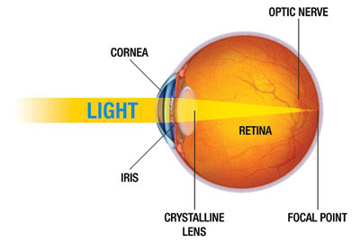 Diagram showing path of light through the eye (normal vision)