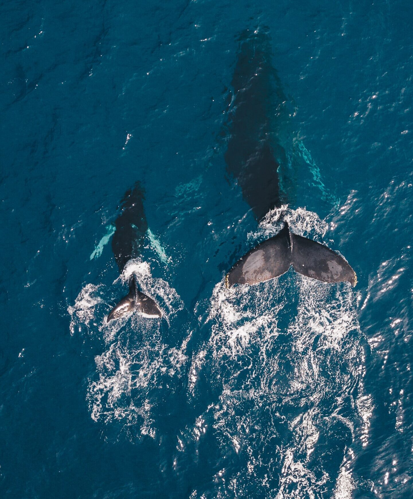 Whales in Maui - Sustainable and Regenerative Tourism Summit Maui