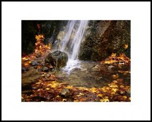 Autumn Splendor_PK_Hill-Hatten
