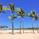 Palm trees in South Beach