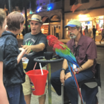 A parrot in Duval St
