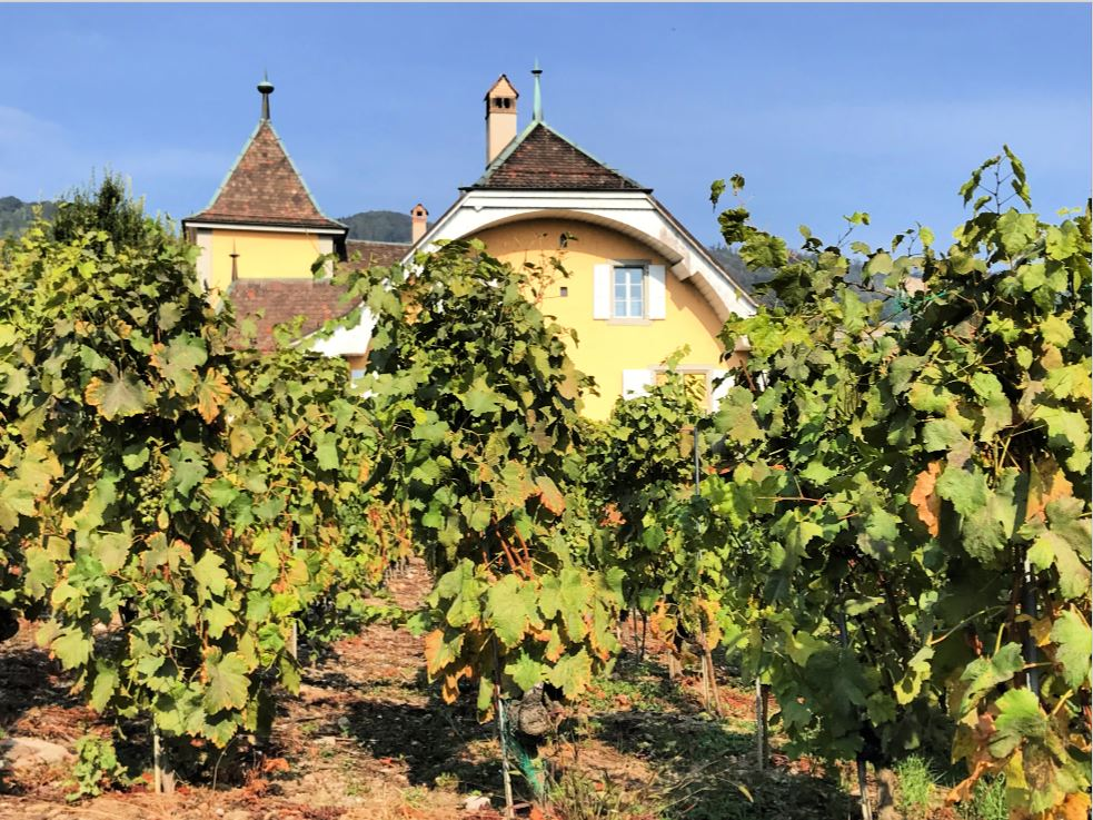 Vineyards in Cully