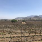 Aranjuez vineyards