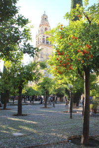 Orange trees with the Bell Tower in the background