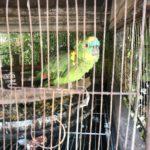 The hostel parrot
