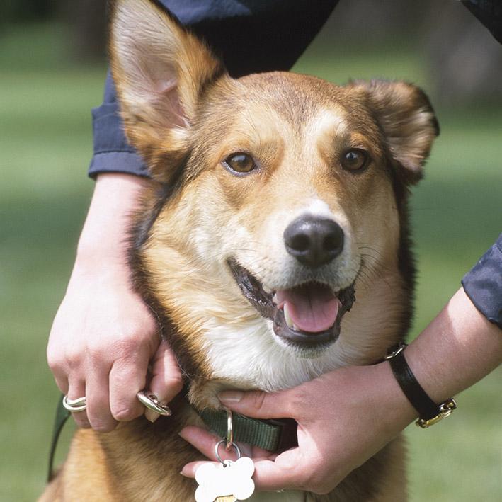 Dog adoption Bakersfield SPCA