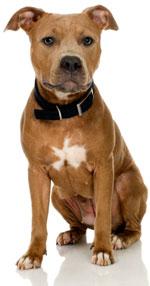 Adopt at Bakersfield SPCA