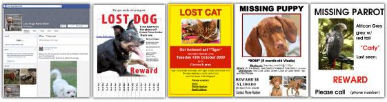 Bakersfield SPCA Lost Dogs