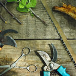 tree removal tools services