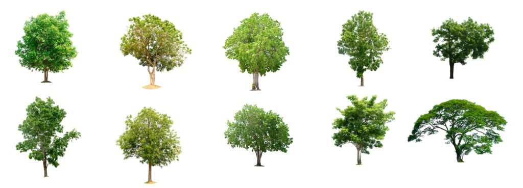 long island types of trees