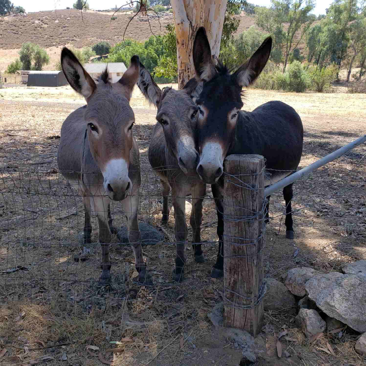 Hee Haw Place Donkey Rescue