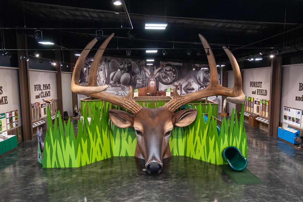 Giant Deer Head