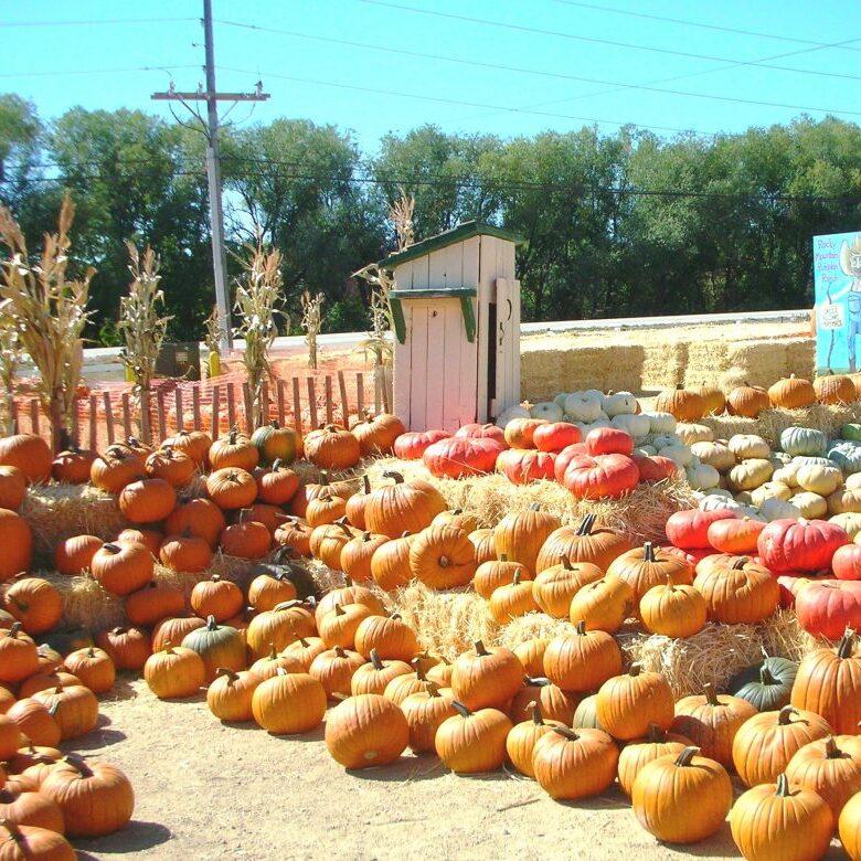 Pumpkins01-1024x780
