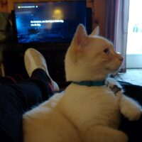 Lost white male cat with blue eyes and soft orange markings. Has a tag, John Snow and 208-304-4933
