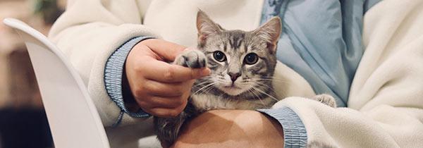 Veterinarian checking a kitten's paw