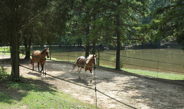 Horse Riding Lessons & Boarding