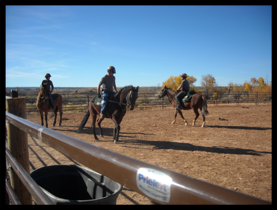 Training the horses to side-pass