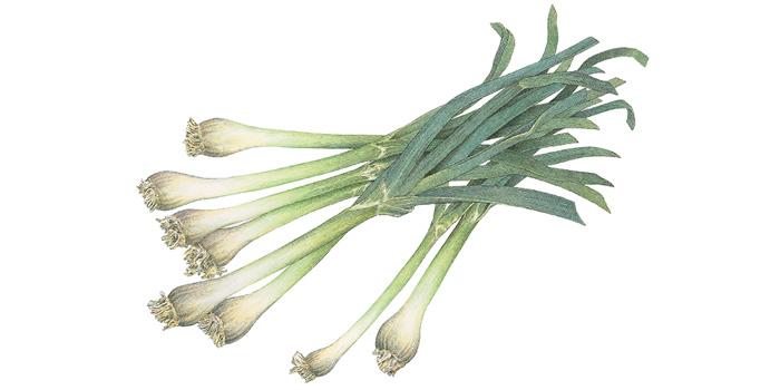 Whats-in-Season-green-garlic-700