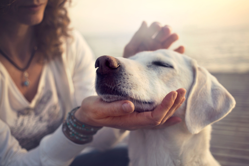 woman with dog by Cristina Conti shutterstock_423355195