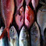 Mislabelled fish products has been an issue, some being inadvertant misidenfication and others being purposeful substitution and representation.