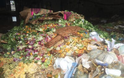Organics 101: A Stakeholder's Guide to Organic Waste Material and Potential Strategies for Processing