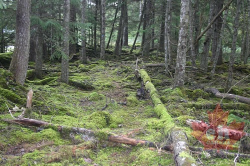 old-growth-alley-forest-floor