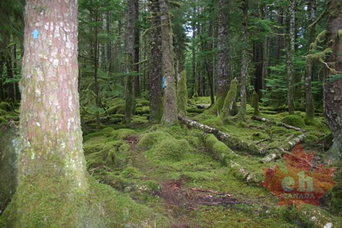 old-growth-alley-markers