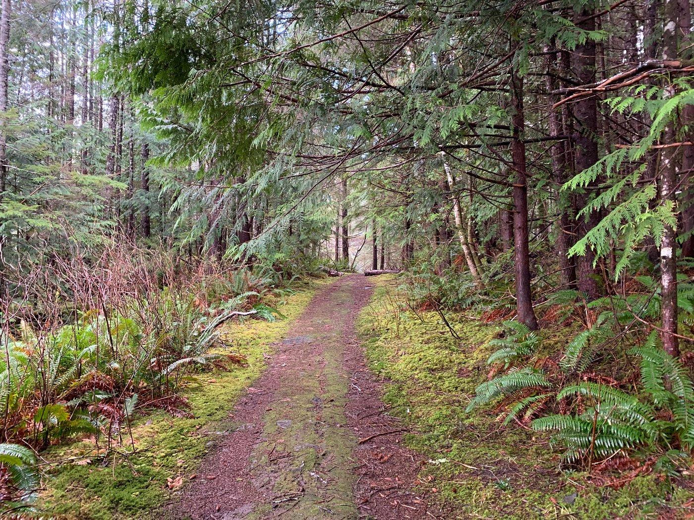 tarundl-skid-road