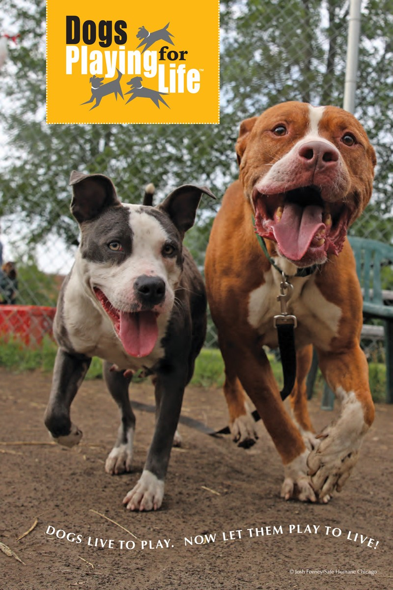 Dogs Playing for Life Resource Manual p1