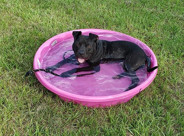 Pesto loves his pink pool